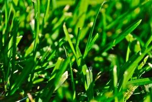 1336561_grass