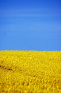 1183627_blue_and_yellow